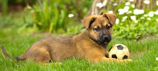 hunde cheap spielende hunde nach der with hunde excellent die kleine ist sehr freundlich und. Black Bedroom Furniture Sets. Home Design Ideas
